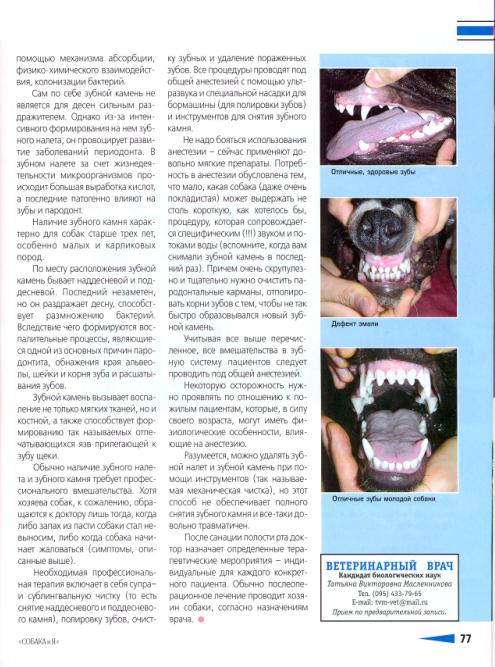 О проблемах с зубами у собак