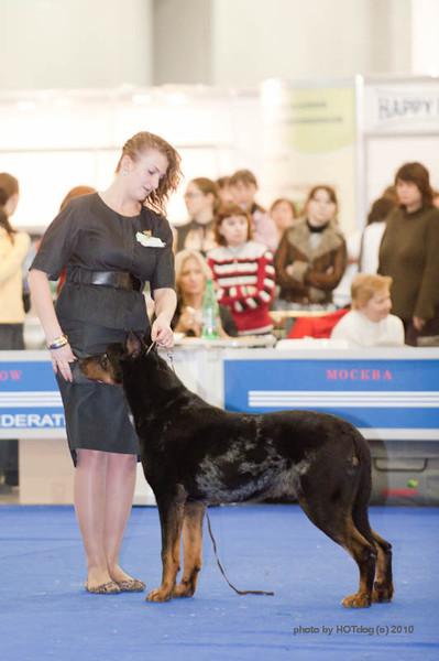 Результаты Международной выставки собак ЕВРАЗИЯ-2010