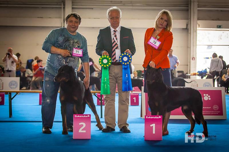 Собаки питомника Кантрифолк Гемма и Фокс на Чемпионате Мира