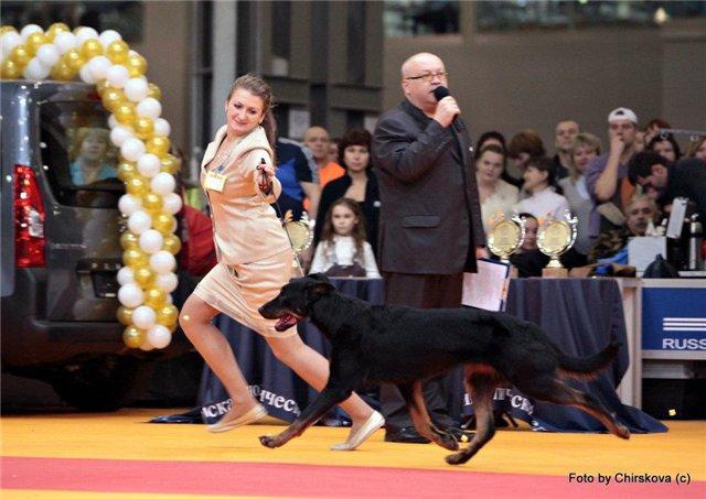 Золотой ошейник - 2011