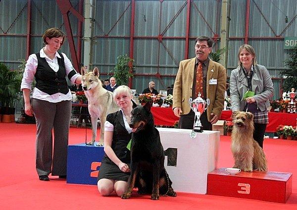 Международная выставка собак в Лиможе (Франция)