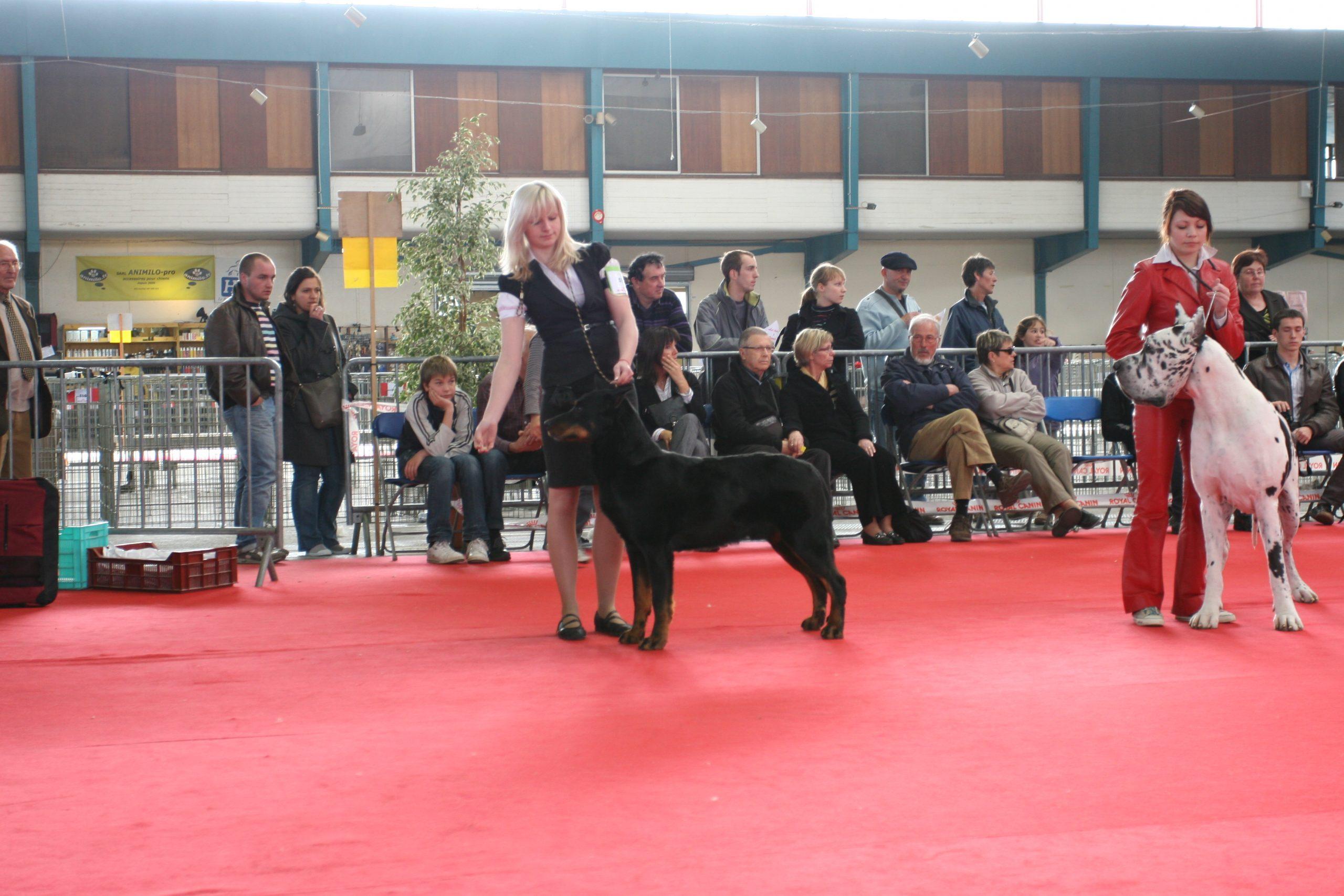 Фотоотчёт о Международной выставке собак в Лиможе