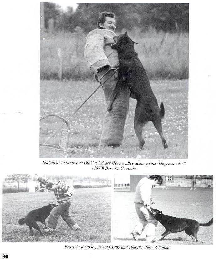 Что нужно помнить, приступая к дрессировке собак