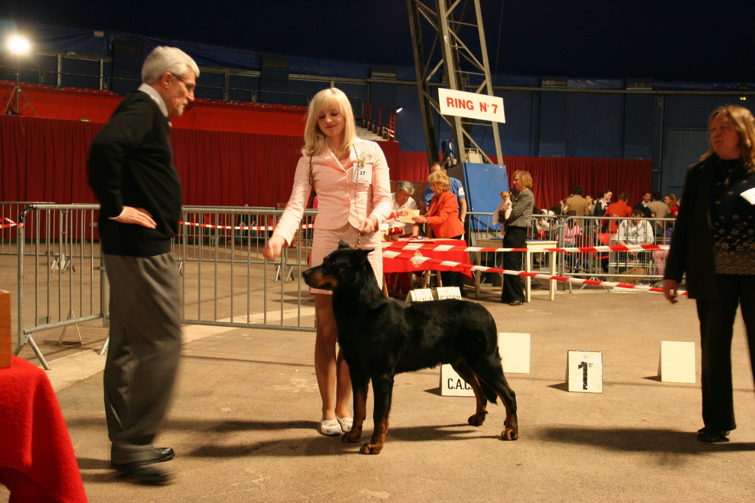 Фотоотчёт о Международной выставке собак в Монако