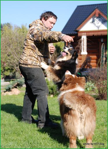Австралийские овчарки Вестерн и Грэмми