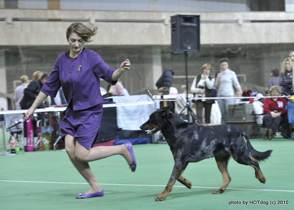 Результаты Всероссийской выставки собак имени Сабанеева