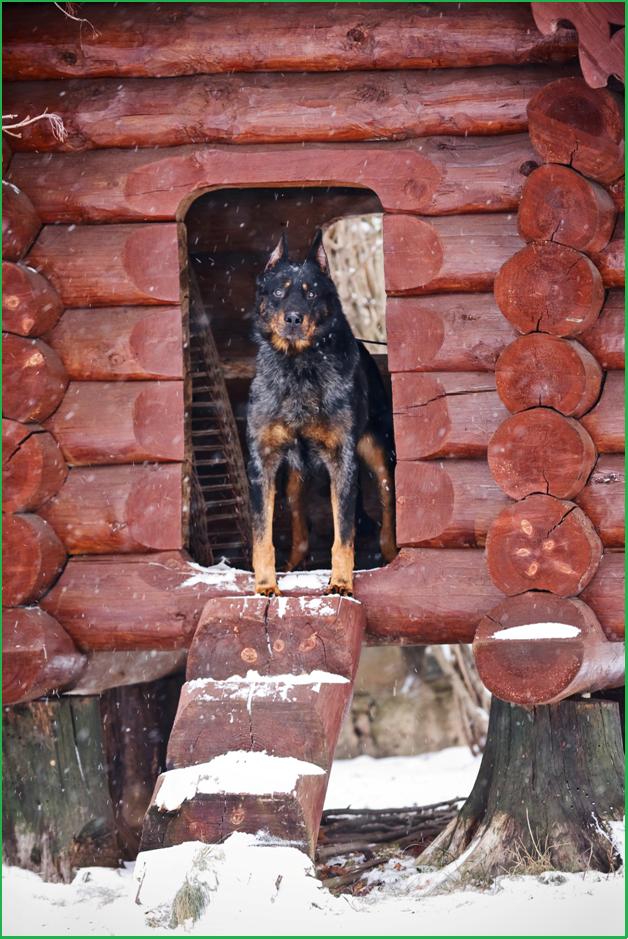 Зимняя фотосессия в питомнике Кантрифолк