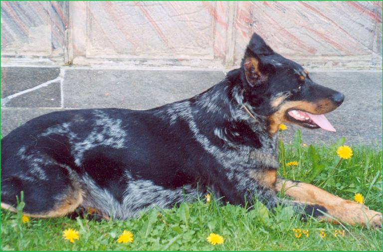 Tess-Blue Du Clos Des Onyx (Тесса)