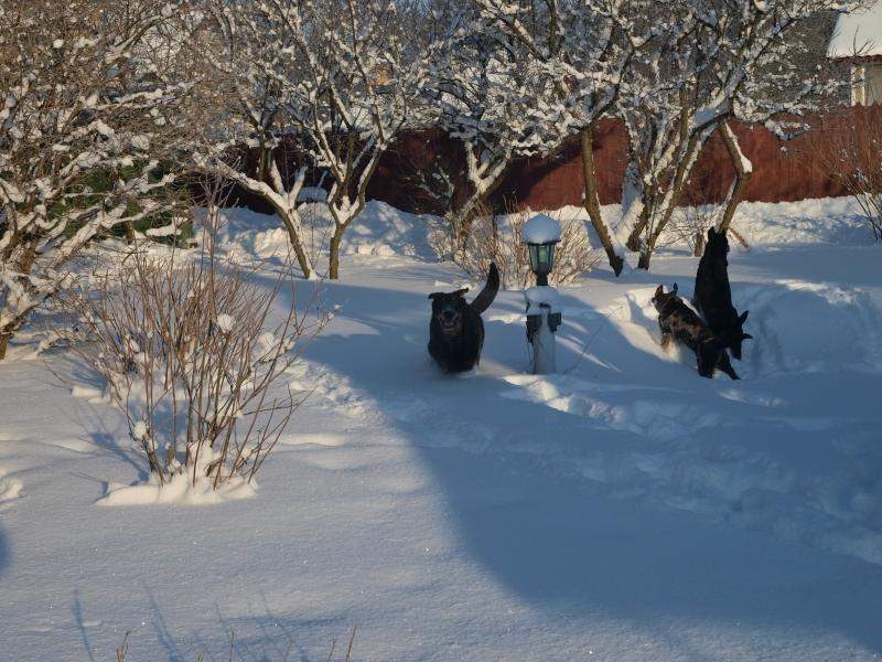 Зимний архив. Часть 2