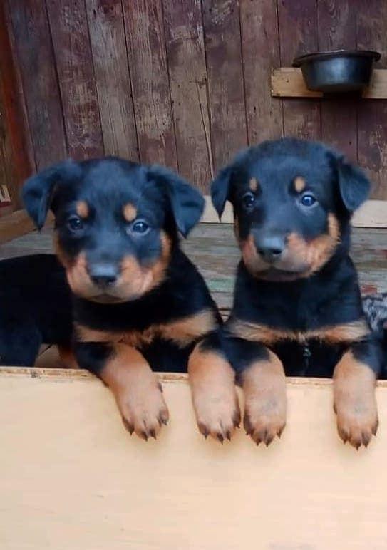 Самые милые и забавные щенки